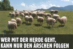 Wer mit der Herde geht, kann nur den Ärschen folgen.