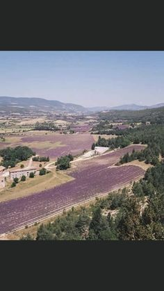 Lavander, Vineyard, Outdoor, Outdoors, Vine Yard, Vineyard Vines, Outdoor Games, The Great Outdoors