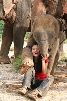 """Founder of Elephant Nature Park: Sangduen """"Lek"""" Chailert. Time Magazine's Hero of Asia, and the Mother Teresa of abused and injured elephants"""