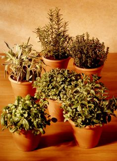 WHAT HERBS CAN YOU GROW INDOORS