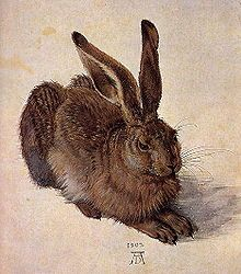 Albrecht Dürer, Young Hare, 1502, Watercolor and body color, Albertina, Vienna.