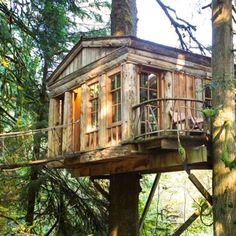 If you're tired of cookie-cutter hotel rooms, maybe it's time to climb into a tree.