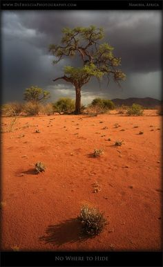 No where to Hide - DI Fruscia Photography - Namibia, Africa - Beauty of Fine art Nature and Landscape photography gallery, Limited edition prints and pictures