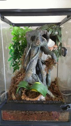 Tropical tarantula, used resin tree limbs and cork to keep habitat from molding. Never use real woods due to rapid mold growth. Also live plants are always a good option