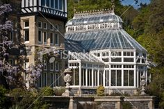 English Victorian Greenhouse with Wisteria Royalty Free Stock Photo