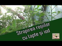 Tomato Garden, Garden Tomatoes, Organic Fertilizer, Youtube, Solar, House, Plant, Home, Youtubers