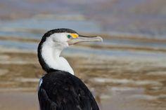 Cormorant on the beach by glenn bemont on 500px