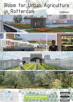 Room for Urban Agriculture in Rotterdam
