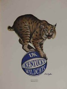 University Of Kentucky Wildcats Kentucky College Basketball, Uk Wildcats Basketball, Kentucky Sports, Sports Basketball, Kentucky Girls, Basketball Players, Basketball Shoes, Kentucky Wildcats, University Of Kentucky