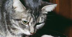 Como treinar um gato de comportamento difícil. Gatos são famosos por serem independentes, mas podem ser treinados. No entanto, quando você tem um gato levado, desobediente e difícil, o trabalho é ainda mais difícil. Você precisará de muita paciência e senso de humor. Treinar um gato significa aprender a cooperar com ele mais do que ensiná-lo a fazer o que você quer para que ambos fiquem ...