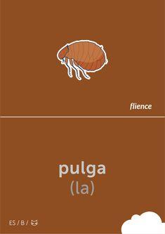Pulga #flience #animal #insects #english #education #flashcard #language Spanish Flashcards, Insects, Language, English, Animal, Education, Website, Design, German