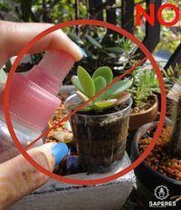¿Quieres tener o tienes plantas suculentas pero no sabes cómo, cuándo o cuánto regarlas? SAPERES nos lo cuenta todo: será así de fácil.