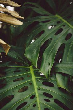 Ventnor Botanical Garden Hot House 2017 Source by servintuncel Tropical Vibes, Tropical Plants, Tropical Flowers, Atlanta Botanical Garden, Botanical Gardens, Bell Gardens, Plant Aesthetic, Aesthetic Collage, Plant Pictures