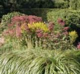 Joe-Pye Weed (Eupatorium purpureum) - Growing a Tall, Late Season Bloomer: Fall Blooming Joe Pye Weed complements the rich yellow of Goldenrod.  Pairing it with a fountain grass and the spiky goldenrod gives the combination its architectural feel.