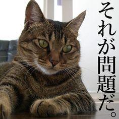 特に意味は無い #instagramcats #catsagram #petstagram #catlover #instacat #catoftheday #instagood #catsofinstagram #mycat #cat #cats #ねこ #猫