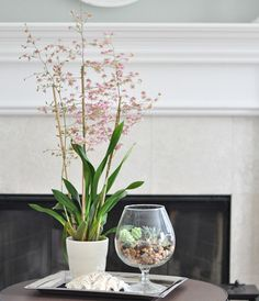 Add a touch of greenery indoors with a terrarium. Find out how to make one here: http://www.bhg.com/blogs/centsational-style/2013/02/21/diy-project-terrariums-2/?socsrc=bhgpin022413terarrium