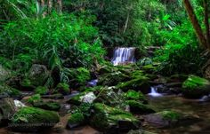 Tropicália by DaniloFaria  green waterfall moss polarizer flowers. urban forest Tijuca Forest warming filter ND filter Brazil N