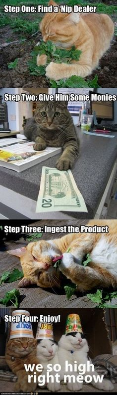 hahahahha... good thing we grow that stuff, saves our kitty much $$$