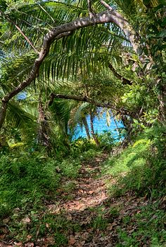 Jungle Path - Fregate Island, Seychelles