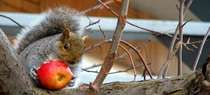You can build a squirrel feeder to prevent them from invading bird feeders.