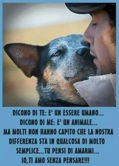 Amare Pet Dogs, Dog Cat, My Best Friend, Best Friends, Animals And Pets, Cute Animals, Different Dogs, Australian Cattle Dog, Dogs Of The World