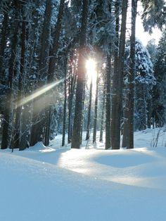 Alpine conifer forest on a sunny winter day. Grisons/Graubünden. Switzerland