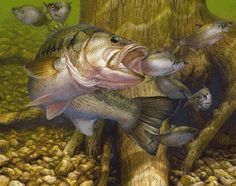 #art #fishing bass images of fish | We're so confident about The Bass Fishing Matrix , we offer you this ...