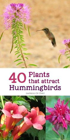 There are many different flowering plants you can add to your garden or balcony to attract and nourish these beautiful birds. Hummingbirds, like bees and butterflies, are essential pollinators for the garden. Empress of Dirt Diy Garden, Lawn And Garden, Garden Projects, Garden Landscaping, Shade Garden, Hummingbird Flowers, Hummingbird Garden, Butterfly Plants, Butterfly Bush