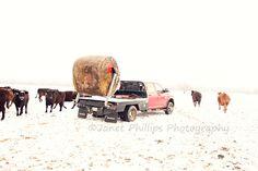 A Farm Wife's Life: Feedin' Cattle in the Snow