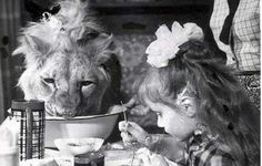 breakfast with a lion