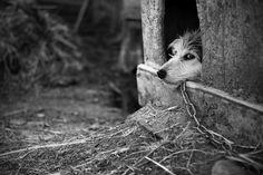Limiting freedom: Photo by Elena Alhimovich #dog #elena_alhimovich