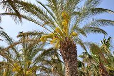 Palmen Antalya, Liberty, Plants, Vacation, Political Freedom, Freedom, Plant, Planets