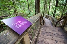 http://jaybanks.ca/vancouver-blog/2013/11/19/capilano-suspension-bridge-photos/   The great Capilano Suspension Bridge Park in Vancouver, BC with lots of attractions! Can't wait to visit it again in the winter...I heard they will have the tallest Christmas tree in the world this year.