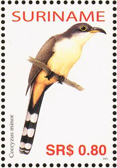 38 Best Cuckoos Of The World Images On Pinterest