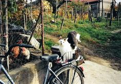 Maci biciklizni akar