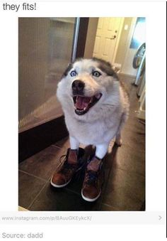 """Dogz In Boots @1petstop Free Dog Training Videos"" Download Here: http://www.dogytrain.4ugood.com"