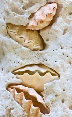 Shell, A Gift From the Sea – 40 Wondrous Pictures | http://art.ekstrax.com/2014/12/shell-a-gift-from-the-sea.html