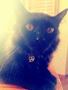 Bella, my salem kitty is complete. Hiss hiss. Mote it be :-)