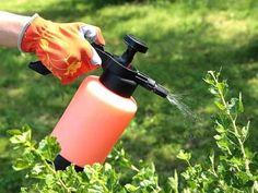 eau oxygénée utilisée pour lutter contre mildiou jardin rosier
