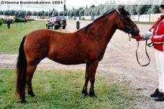 Gotland Pony mare Ai.Ka. Cheelia