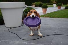 Wanna play? Please?