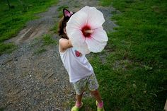 Sementes Hibisco Gigante Hibiscus Moscheutos Branco P/ Mudas - R$ 9,90 no MercadoLivre