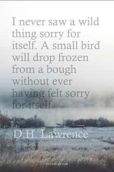 """""""I never saw a wild thing feeling sorry for itself. A small bird will drop frozen from a bough without ever having felt sorry for itself. Lawrence (I always think of G. Jane when I read this. Great Quotes, Quotes To Live By, Me Quotes, Inspirational Quotes, Motivational, Wild Things Quotes, Self Pity Quotes, Fight Quotes, Meaningful Quotes"""