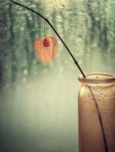 *** by Valeriya Tikhonova Mason Jar Lamp, Rustic Interiors, Bokeh, Wonders Of The World, Flower Power, Flower Arrangements, Table Lamp, Inspiration, Home Decor