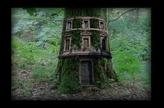 #home #house #tree #forest