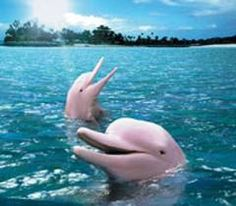 Dreaming of a PINK summer w/ pink dolphins <3