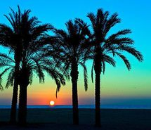 amazing, colorful, cute, palm tree - inspiring picture on Favim.com