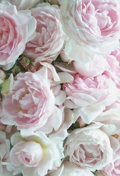 flowersgardenlove:  Pink roses Beautiful gorgeous pretty flowers
