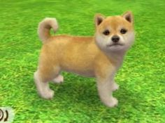 ☆ Source: Nintendogs + Cats - Cream Shiba Inu ☆ Forest Creatures, Mothman, Shiba Inu, Little Sisters, Softies, Aesthetic Pictures, Childhood Memories, Nostalgia, Cute Animals