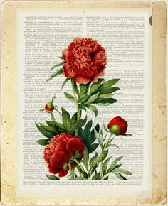 Peony painting printed on old page from dictionary by FauxKiss